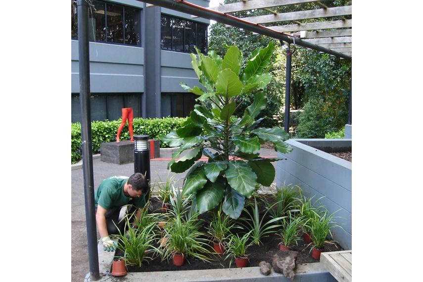 Landscape planting at Central Park, Penrose, Auckland