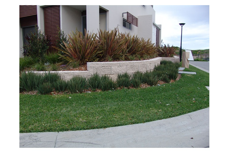 Little Rev is suitable for roadsides, median strips, roundabouts, golf courses, car parks and ornamental gardens.